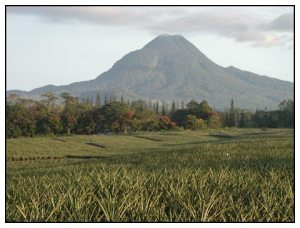 The pineapple plantation of Dole Philippines on the foor of Mount Matutum (Polomolok, South Cotabato, Philippines)